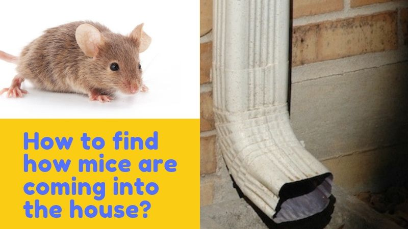 How Do Mice Get In Your House - Entry Point