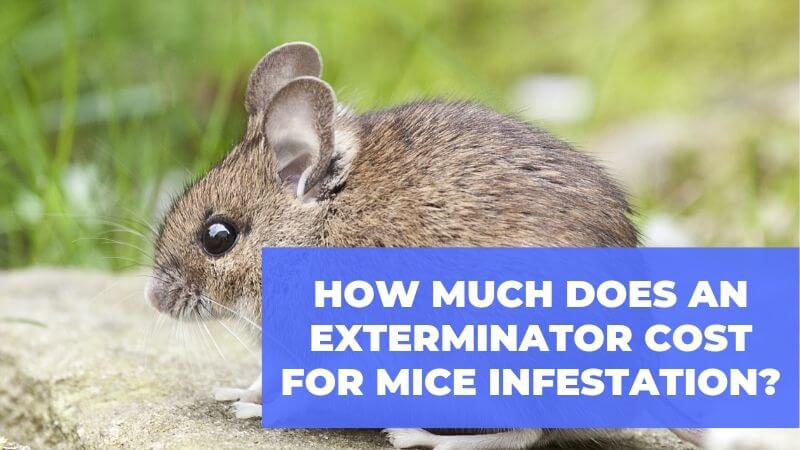 How Much Does a Mouse Exterminator Average Cost