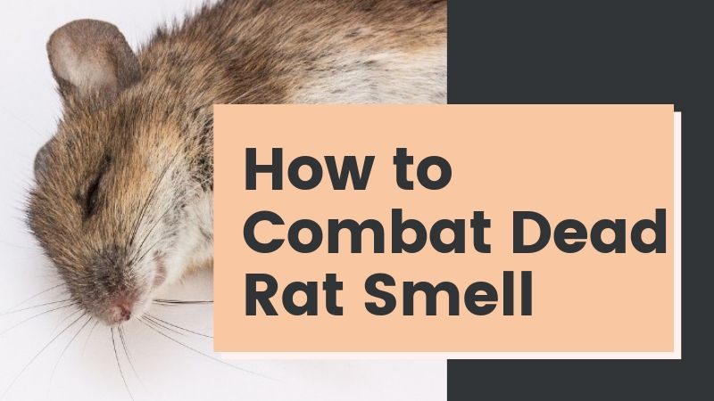 How To Get Rid Of Dead Rat Smell