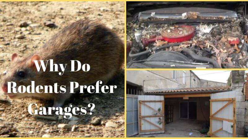 How to Keep Mice Out of Garage