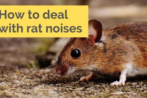 Mice in Wall - How to Make Rodent Proof House Construction