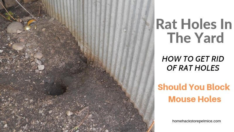 How To Identify And Deal With Rat Holes In The Yard