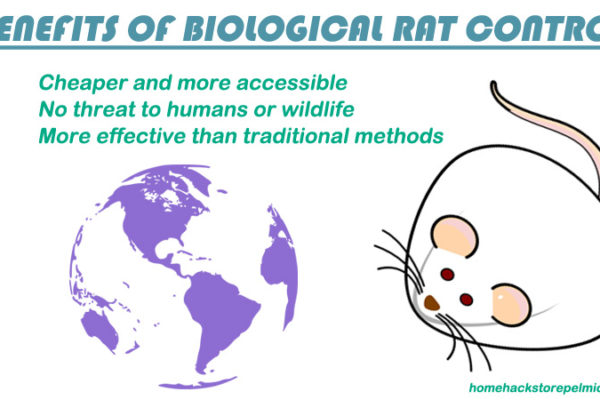 Biological Methods To Control The Rat Population