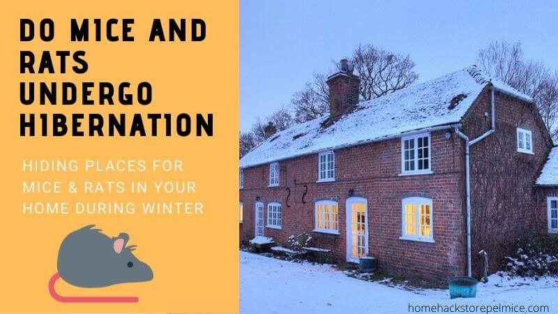 Mice & Rats in your home during winter