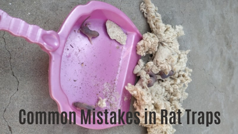Common Mistakes in Rat and Mouse Traps